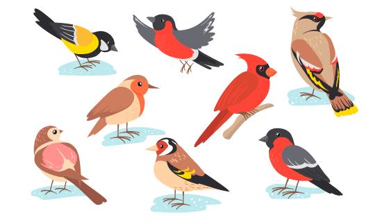 各种各样的鸟矢量素材(EPS)
