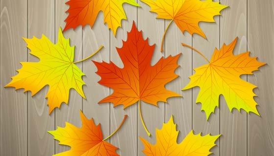 木板上的秋天落叶矢量素材(EPS)
