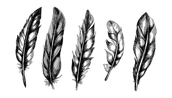 手绘逼真的羽毛矢量素材(EPS)