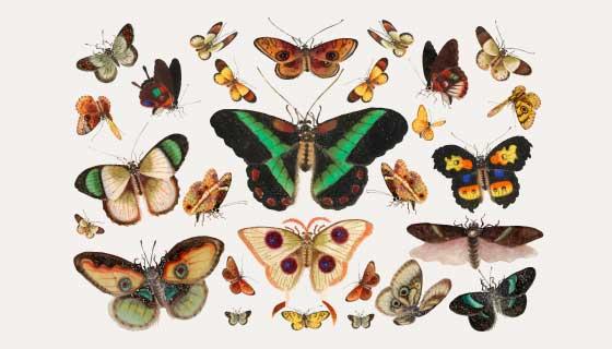 各种逼真的蝴蝶矢量素材(EPS)